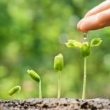4 triky, ktoré 9 z 10 záhradkárov nepozná