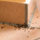 Ako sa zbaviť mravcov – VIDEO návod