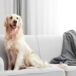 Ako sa zbaviť zvieracej srsti v domácnosti