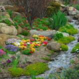 Čo ste o vašej záhrade pravdepodobne nevedeli?